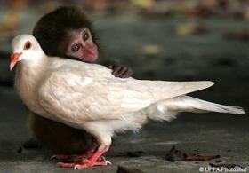 monkeypidgeon.jpg