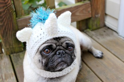 unicorn pug hat from etsy