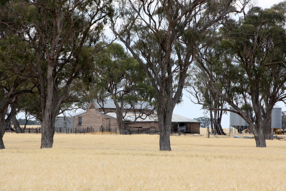 Wool shed near the Grampians, western Victoria. Photo Erle Levey
