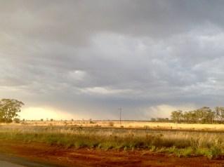 Following the rain, early morning near Nyngan, NSW. Photo: Erle Levey