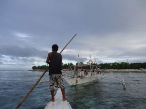 dolphin watching in panglao