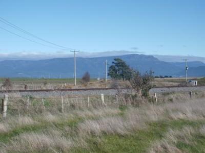 Jonny Blair goes cabbage weeding in Tasmania