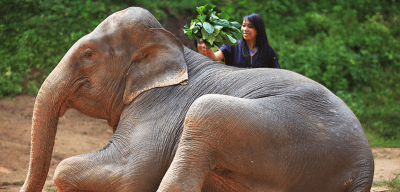 World Travellers: Aileen Adalid partaking in responsible elephant tourism in Chiang Mai.