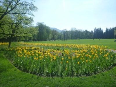 Tulip fields near the Gazebo in Hellbrun