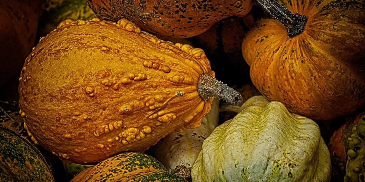 Savoury Pumpkin Pie