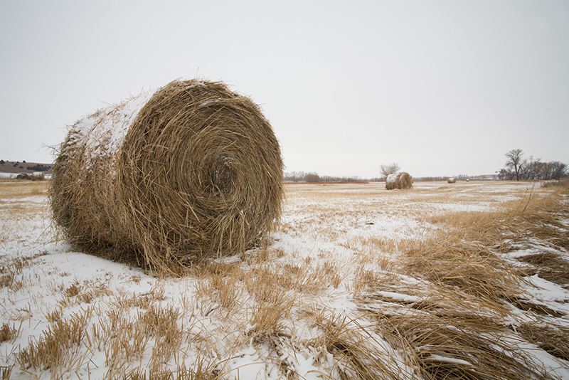 A bale of alfalfa sits on the frozen winter landscape of South Dakota. How can the largeness of the South Dakota landscape help us with coping during covid?