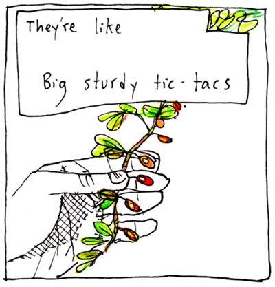 "Square cartoon titled Yardberries by Edith Zimmerman where she uses drawing as therapy. Here she depicts a colored drawing of red berries found in the yard. The text says, ""They're like big sturdy tic-tacs."""