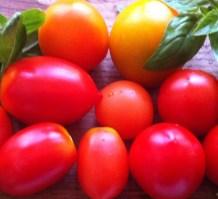 Tomater fra drivhuset