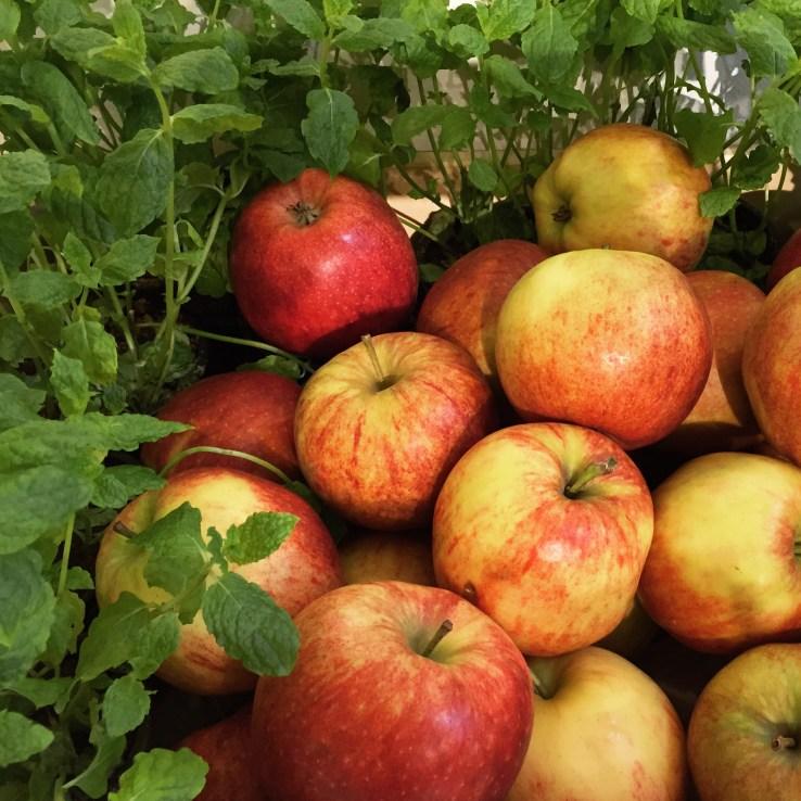 Æbler og mynte