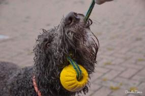 DoodleTimes Hundeschwimmen-15