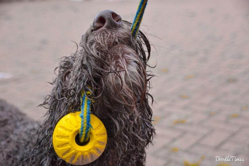 DoodleTimes Hundeschwimmen-16