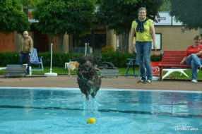 DoodleTimes Hundeschwimmen-4