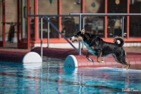 DoodleTimes Hundeschwimmen in Neustadt-16
