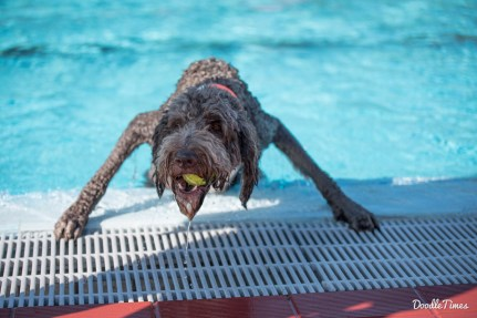 DoodleTimes Hundeschwimmen in Neustadt-2