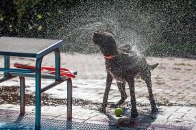 DoodleTimes Hundeschwimmen in Neustadt-22