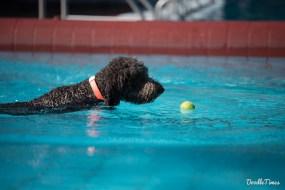 DoodleTimes Hundeschwimmen in Neustadt-6