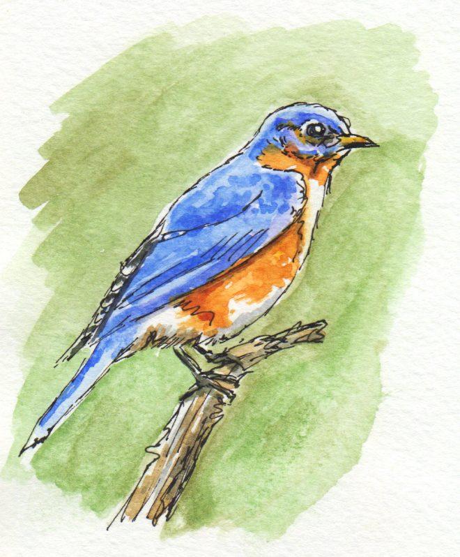 Missouri Bluebird by Charlie O'Shields