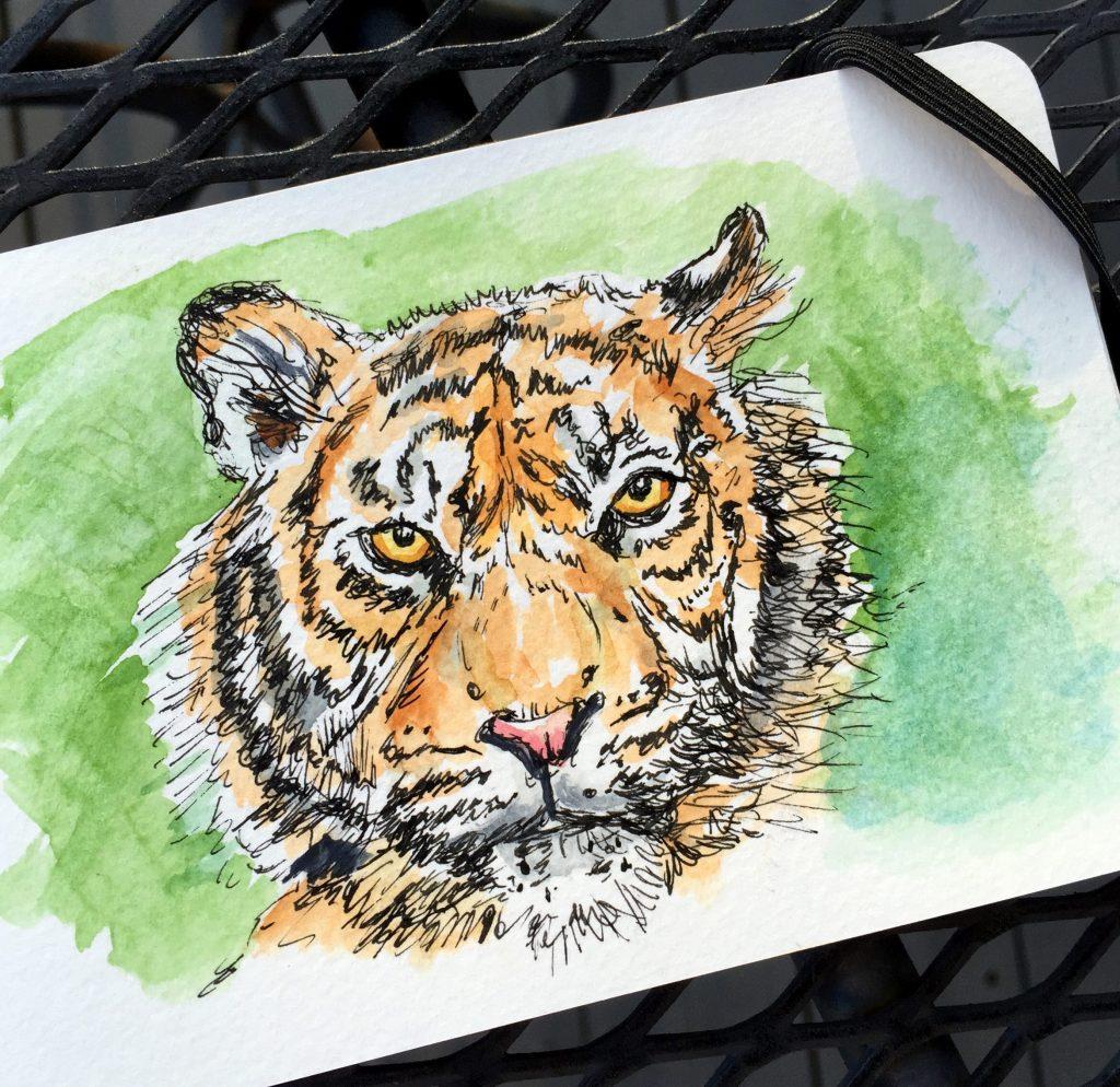 Tiger Sketch by Charlie O'Shields