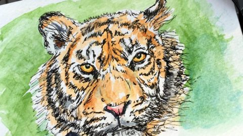 Tiger Sketch by Charlie O'Shields
