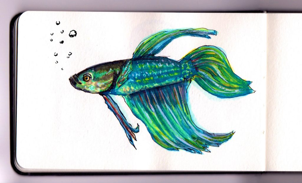 Betta Fish by Charlie O'Shields