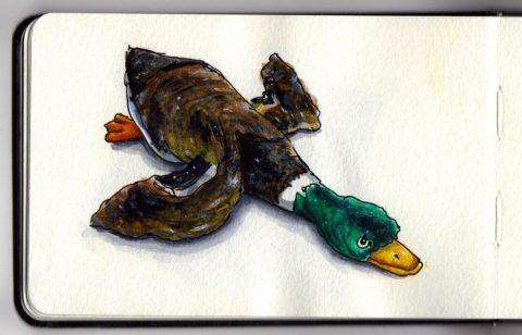Duckie by Charlie O'Shields