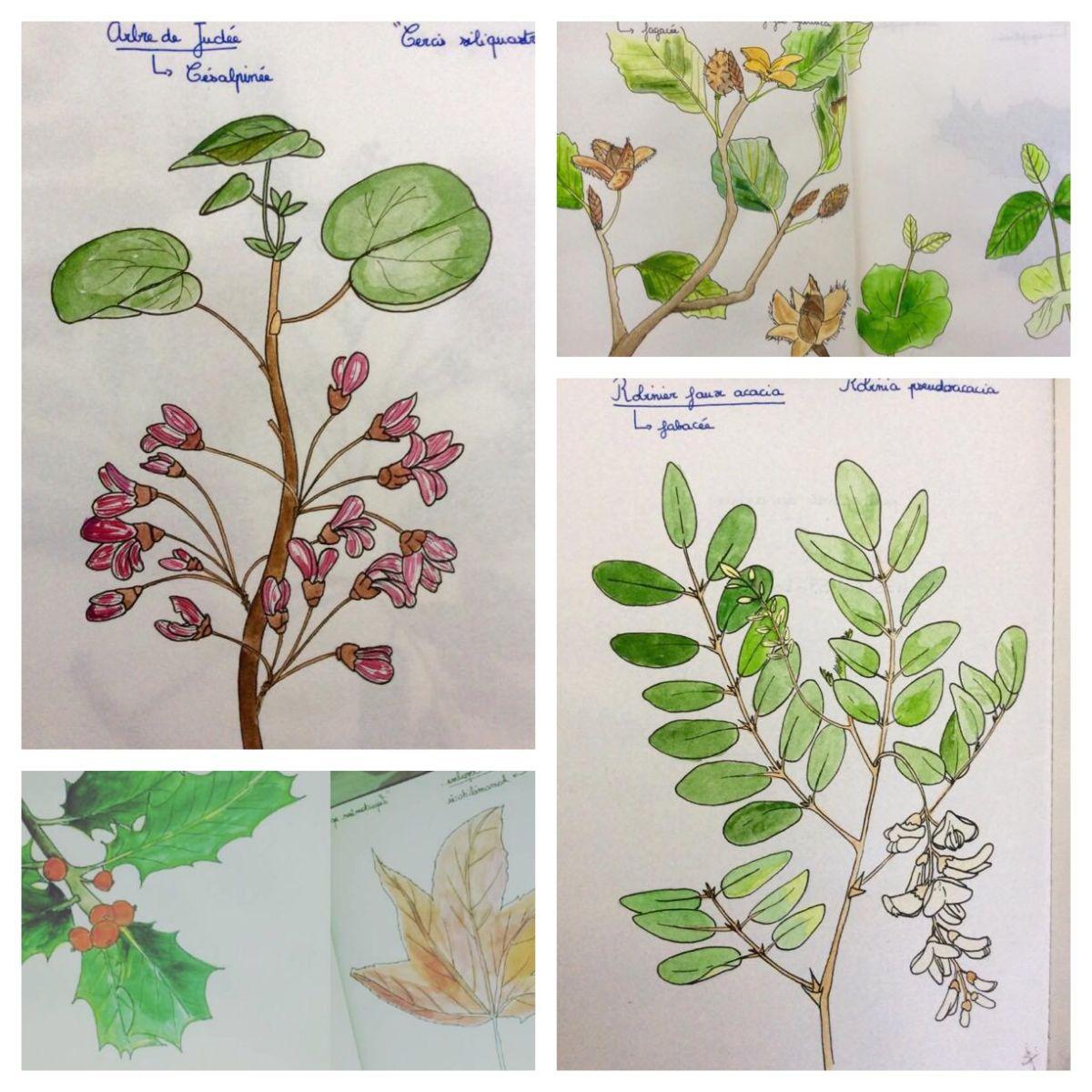 A Sketchy Herbarium - Doodlewashes by Salomé Blain