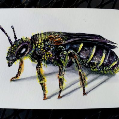 The Sweat Bee by Charlie O'Shields