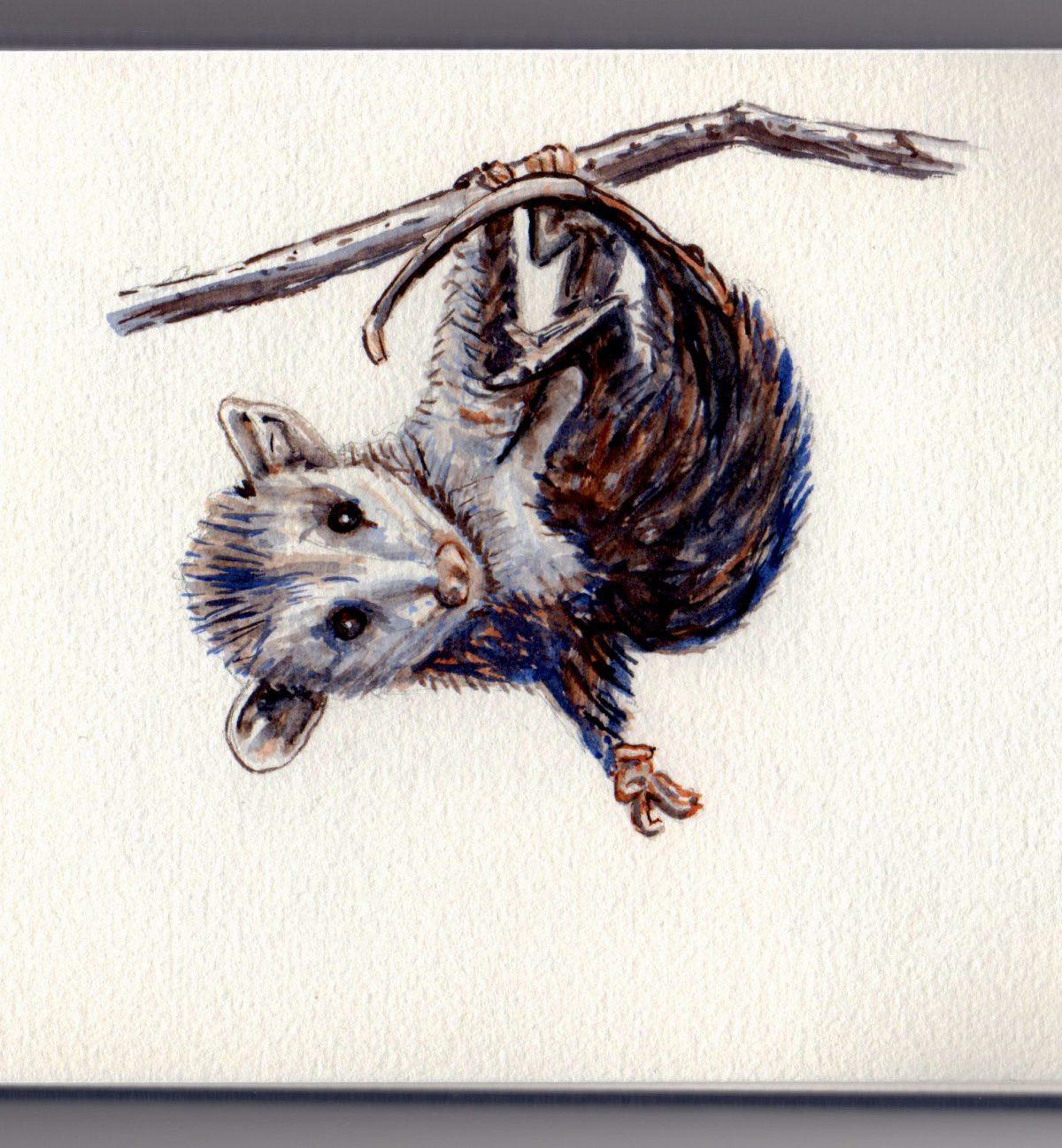 Opossum Doodlewash