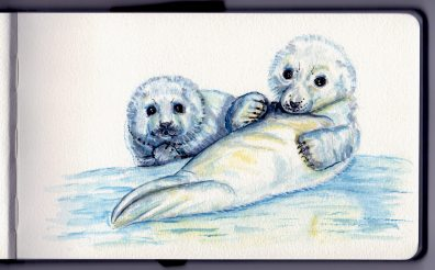 Baby Harp Seals Doodlewash