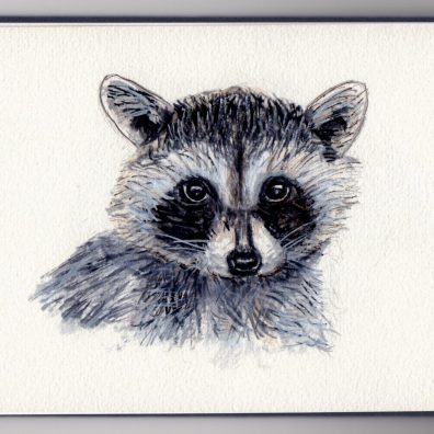 Little Raccoon by Charlie O'Shields