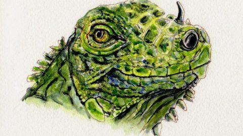 Iguana Doodlewash