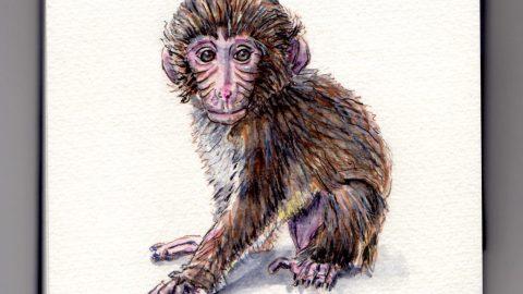 Monkey Doodlewash