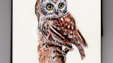 Owl Doodlewash
