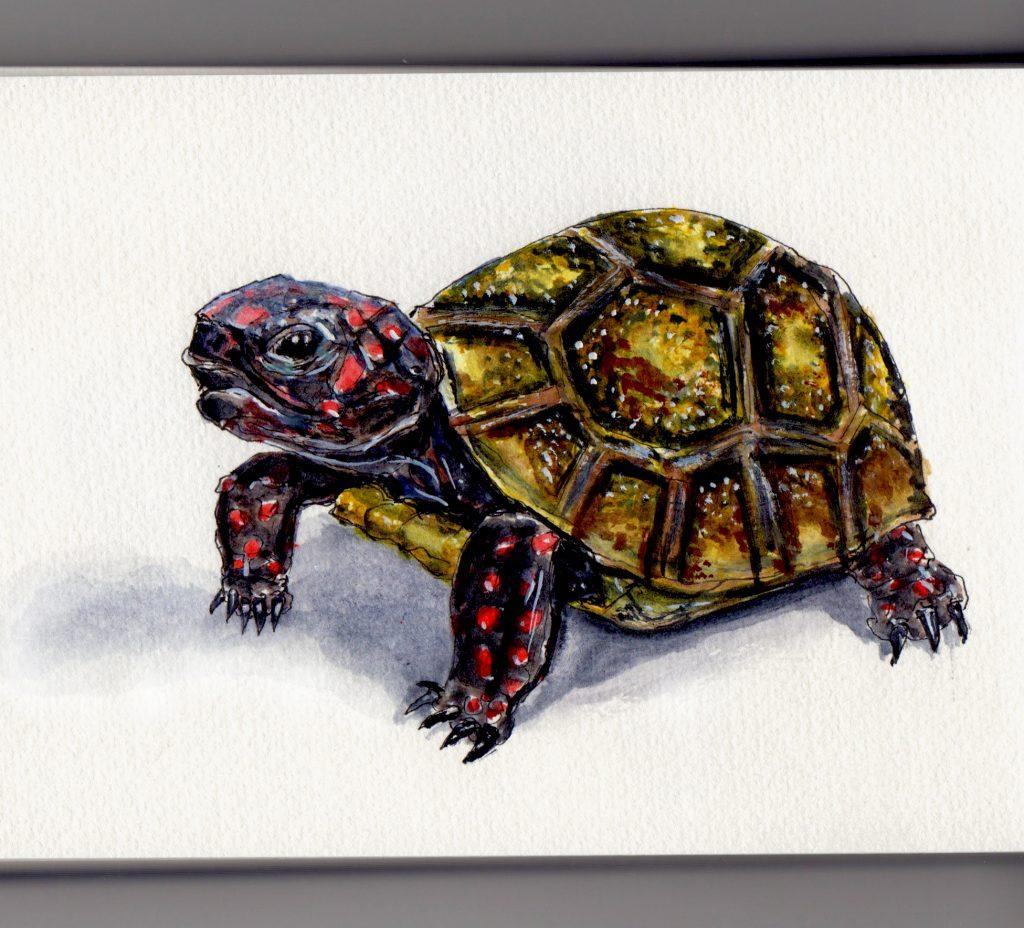 Turtle Doodlewash