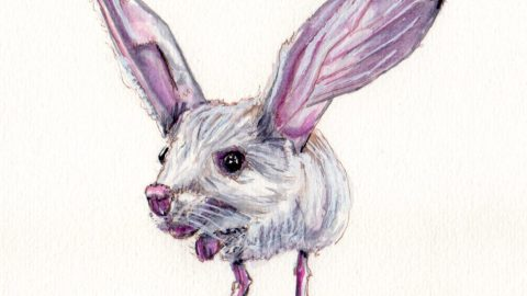 Long-Eared Jerboa Doodlewash