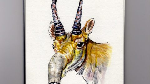 Saiga Antelope Doodlewash - watercolor sketch of male antelope with horns