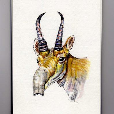 Saiga Antelope Doodlewash - watercolor sketch of male antelope with horns