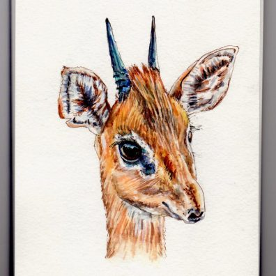The Dik-Dik - doodlewash watercolor sketch of a small antelope in the genus Madoqua that lives in the bushlands of eastern and southern Africa