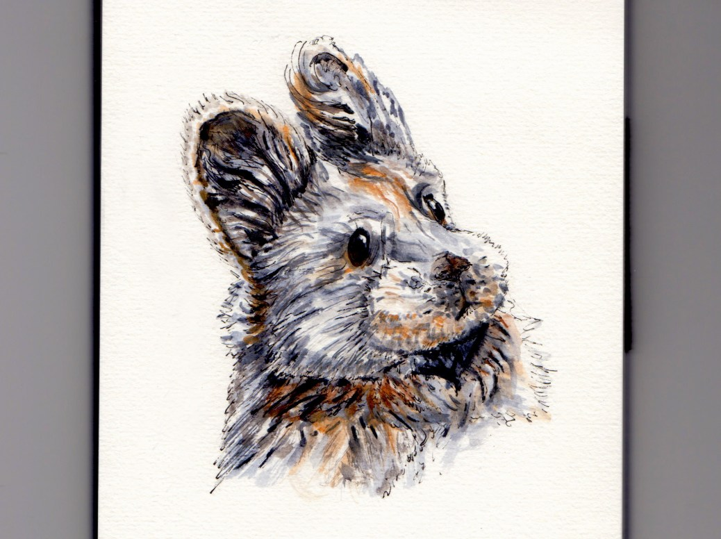The Magic Bunny - Rare highly-endangered Ili Pika also called magic rabbit watercolor sketch
