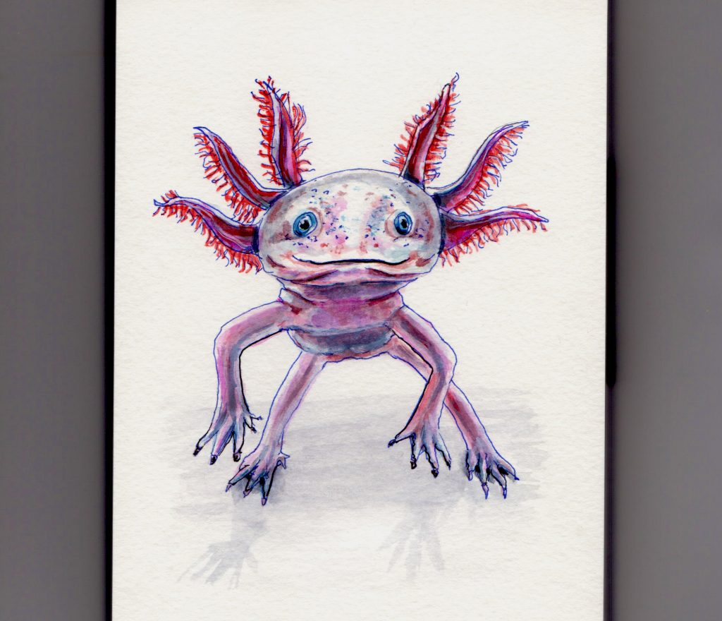The Axolotl Doodlewash
