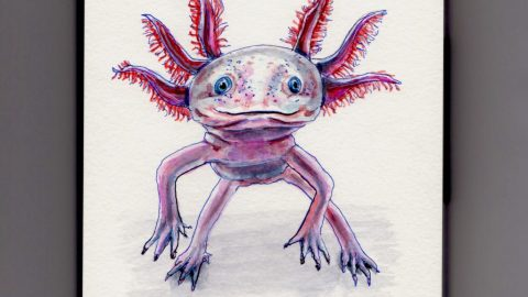 The Axolotl Doodlewash