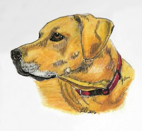 Dog doodlewash by KD Huff - watercolor sketch and pet portrait