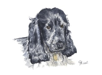 By Hannah Ridout - Doodlewash and watercolor pet portrait of black dog