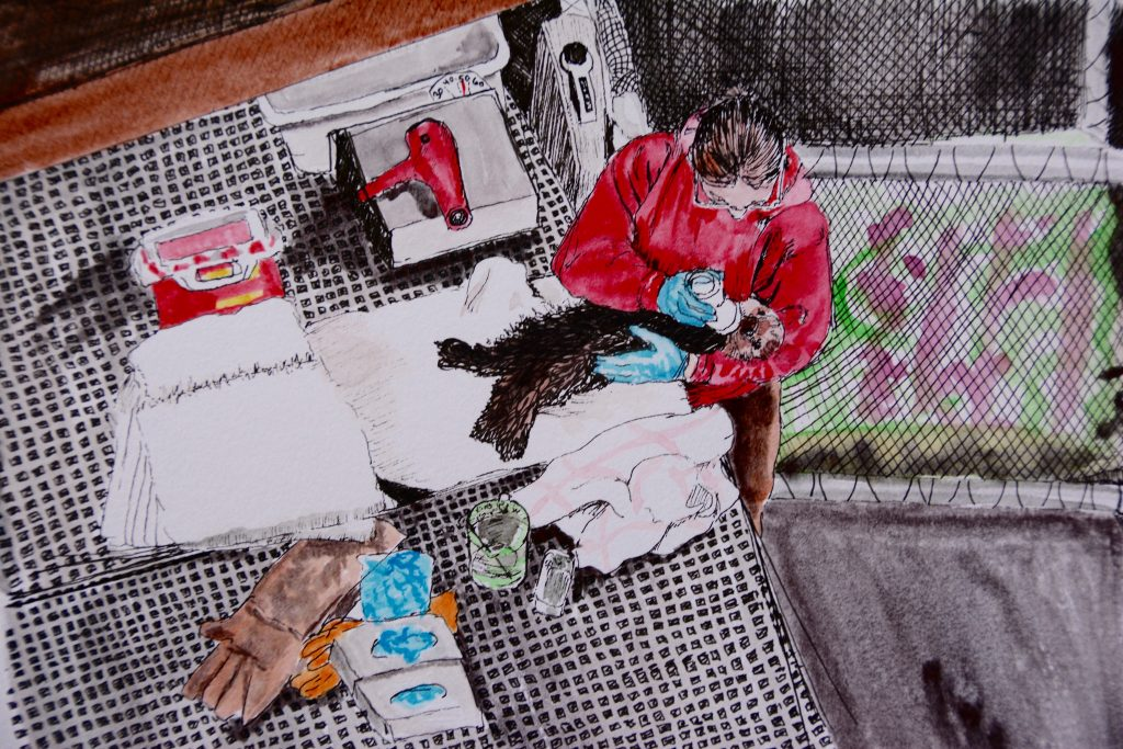 Doodlewash in watercolor of woman feeding a baby sea otter by Jessica Hay