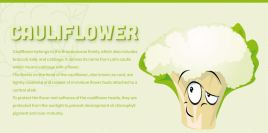 behealthy.today cauliflower-health-benefits-infographic link