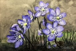Doodlewash and watercolor painting by Sibella of purple Hepatica Flowers