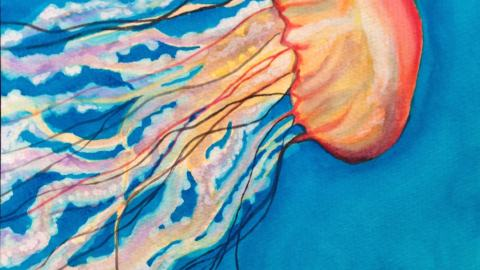 Jellyfish watercolor in Crayola paint - doodlewash by Jen Fabish