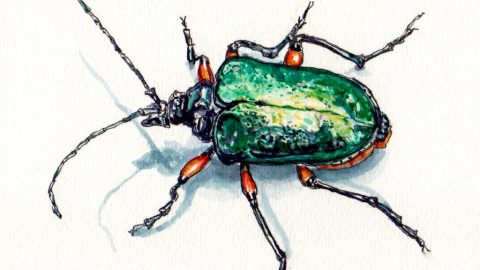 Doodlewash and watercolor sketch of a shiny green yellow and orange beetle