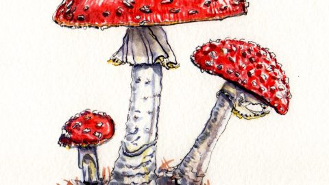 Doodlewash and watercolor sketch of red and white fly agaric Amanita muscaria mushrooms