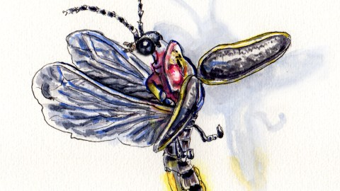 Doodlewash and watercolor sketch of flying firefly on white background with shadow